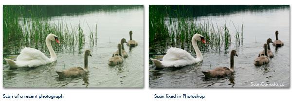 fix photo scan unnatural colors photoshop